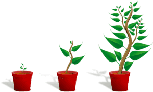 Growth planting germination
